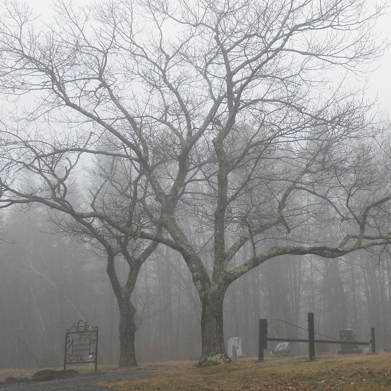 A tree surrounded by mist in a cemetery.
